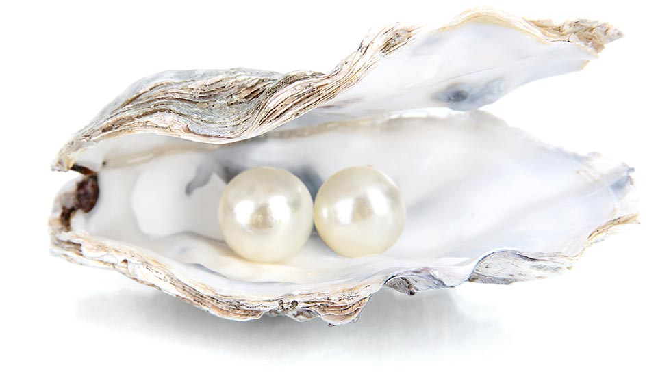 Image result for images of two pearls in a shell
